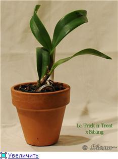 Горшки для орхидей Bdffe7f5f923t