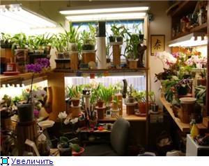 Размещение орхидей Bb8671fa429bt