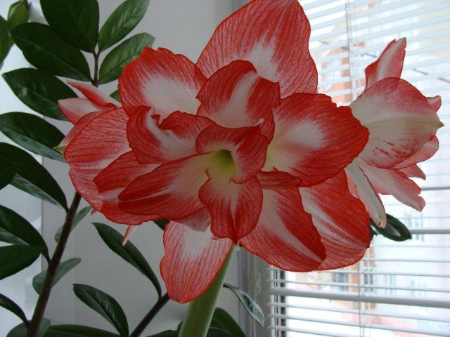 Мои цветочки - Страница 7 21cab1220e3f