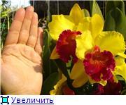 Орхидеи и прочая красота на о. Пхукет - Страница 2 48c058c62413t