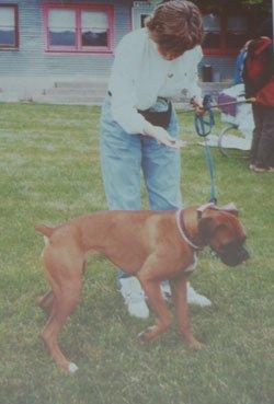 Диалог с собакой: сигналы примирения A36d86e5cd50