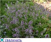 Лето в наших садах - Страница 4 17fe076d5019t