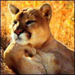 Аватары с животными - Страница 2 661c756f9e3e