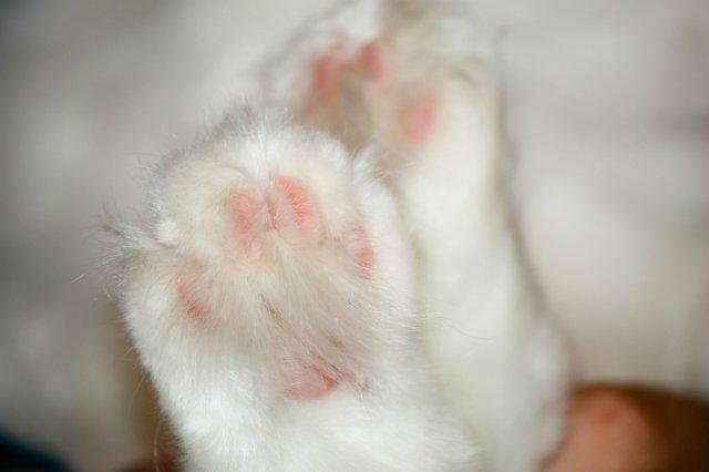 Коты, кошки, котята и все что с ними связано - Страница 4 847b2d27381e
