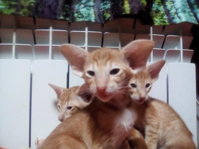 Домашние любимцы Кошки и Собаки - Страница 18 Ad42cbaead5d
