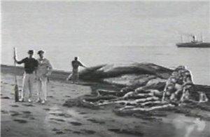 Колпинский форум рыбака - Портал D95bb0475c21