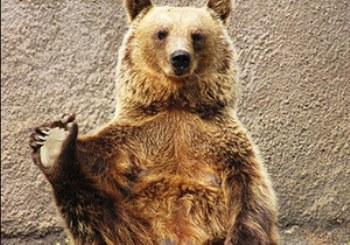 Ничто человеческое медведям не чуждо 52e911654fb2