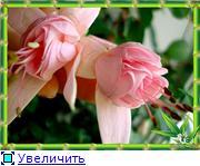 ФУКСИИ В ХАБАРОВСКЕ  - Страница 2 A7527dfe36bbt