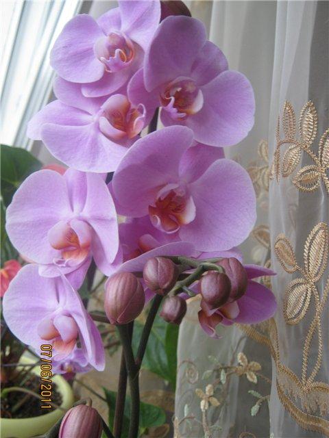 Разведение орхидей. - Страница 13 Df3a37000788