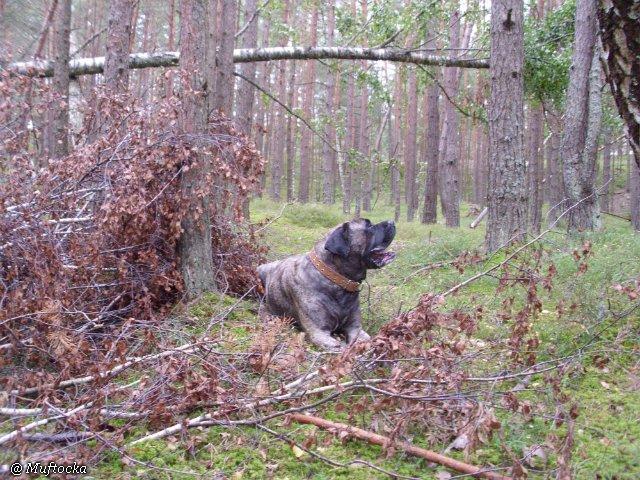 Наши собаки, друзья и гости, кот Мензурка A6e1c89dc3a6