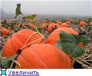 Наши домашние растения - Страница 2 94c8bfd6190ct