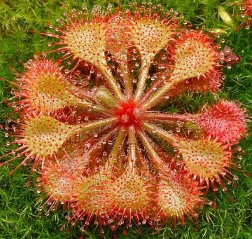 продам семена экзотических растений 889a1fa38f7d