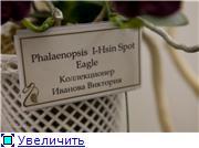 Выставка орхидей в Государственном биологическом музее им. К.А.Тимирязева 3004771d06bdt