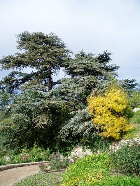 Парад хризантем в Никитском ботаническом саду. Крым  E3d33f5da48b