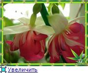 ФУКСИИ В ХАБАРОВСКЕ  - Страница 3 5cd1554c8f09t