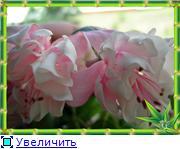 ФУКСИИ В ХАБАРОВСКЕ  - Страница 2 2f029f45e936t