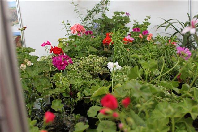 Выставка ландшафт и приусадебное хозяйство 2011, Алматы. - Страница 2 4835b02f4c37