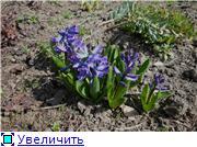 Весна идёт... Fc89dd7711a1t