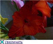 Гладиолусы - Страница 2 561e7403f3cbt