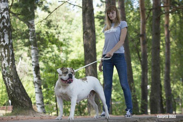 Собаки питомника Carpen Diaz - Страница 2 Eb386fed8fd6