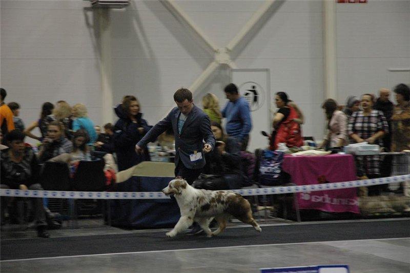 Выставочные успехи наших собак - 5 - Страница 30 F739219167fe
