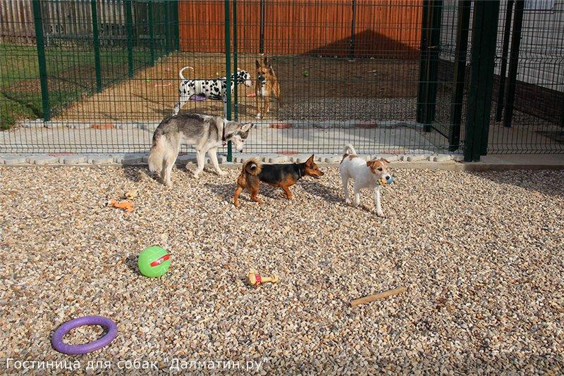 Семейная гостиница для собак в Дедовске (передержка) F427149429bd