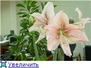 Наши цветочки Fa55ba2ae3a0t