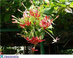 Орхидеи и прочая красота на о. Пхукет - Страница 2 787aba9adaa6t
