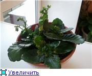 Рыськино СЧАСТЬЕ E712b12ce89at
