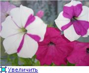 Рыськино СЧАСТЬЕ 53f32aaafc69t