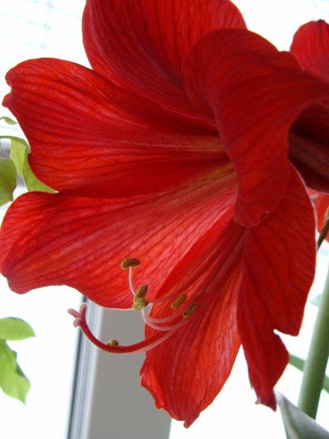 Мои цветочки - Страница 7 0e53d80e6bf1