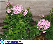 Лето в наших садах - Страница 6 84b418eed74ct