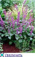 Наши домашние растения - Страница 2 0f01d7e6e5a8t
