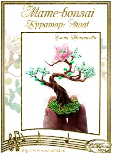 """Галерея """"Mame-bonsai"""" Ff6f40512e21t"""