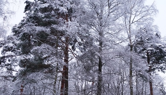 Зимняя сказка на наших фотографиях - Страница 14 68db0e4387b2