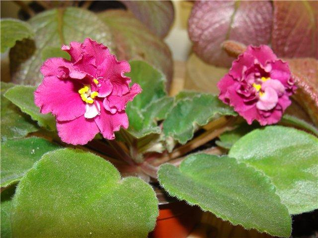 Весеннее  цветение (Хваст от Веры) - Страница 6 127bdabd4539
