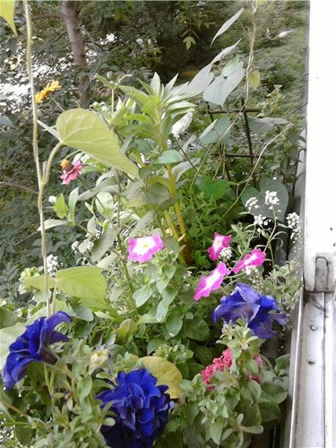 Цветы на балконе. - Страница 5 F71f30fdf39c