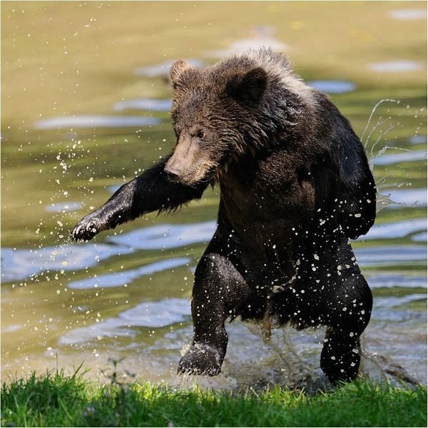 Ничто человеческое медведям не чуждо 2f669db72aef