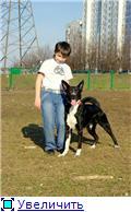 Чара - потрясающая собака! Ищет лучших хозяев! 4476d64e25b3t