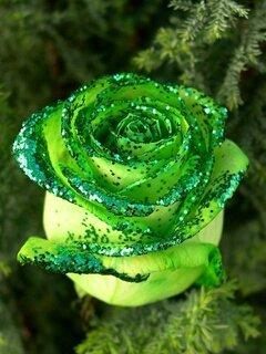 Поздравляем с Днем Рождения Ирину (ir-timak) 743b6b852fcct