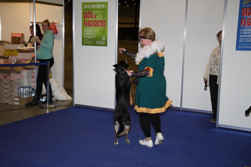 Танцы с собаками - Страница 3 Bf15e7d1e64f