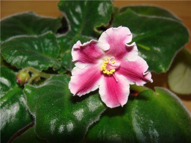 Весеннее  цветение (Хваст от Веры) - Страница 7 7ea37e7585ed