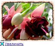 ФУКСИИ В ХАБАРОВСКЕ  0698be80b6fet