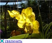 Орхидеи и прочая красота на о. Пхукет - Страница 2 8acc6f07ebd9t