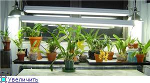 Размещение орхидей 5d1df5d2a14bt