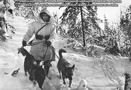 Собаки Великой Отечественной войны 3d8f4c0ca154