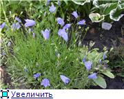 Лето в наших садах - Страница 2 7009ee97377dt