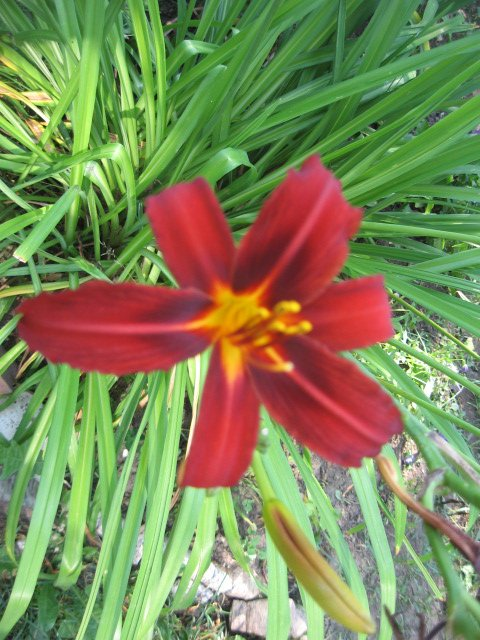 Во саду ли, в огороде... - Страница 6 313f5eba91c0