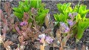 Весна идёт... - Страница 2 E534c0b8bf58t
