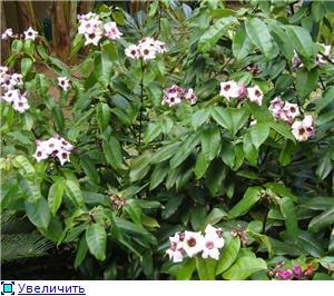 Орхидеи и прочая красота на о. Пхукет - Страница 2 039a47f86e42t